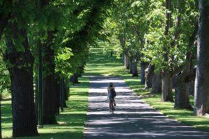 Melbourne Greenery